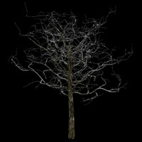 3d model tree 2 branches snow