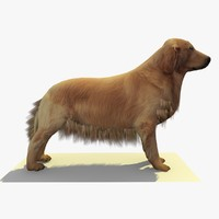 golden retriever dog 3ds