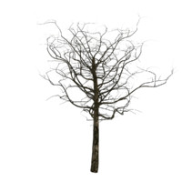 tree 2 branches 3d max