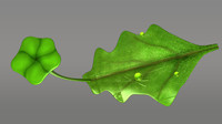 marchantia thallus male 3d obj
