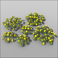 c4d winter aconite flower