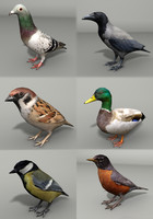 3d model birds hooded mallard