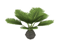 small palm tree 3d model