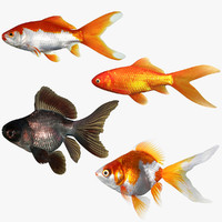 3d model goldfish set