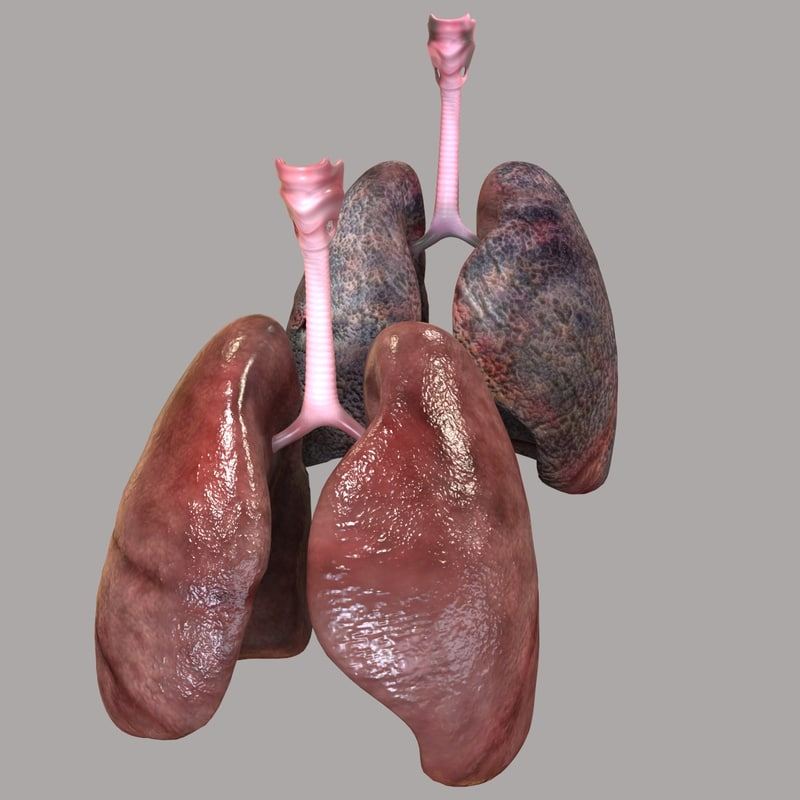 Actual human lungs