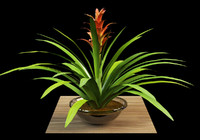 max guzmania flower