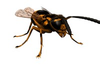 wasp insect 3d model