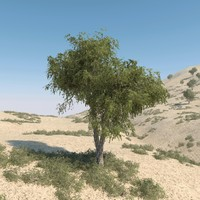 Ghaf Tree Collection