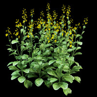 rapeseed brassica napus 3ds