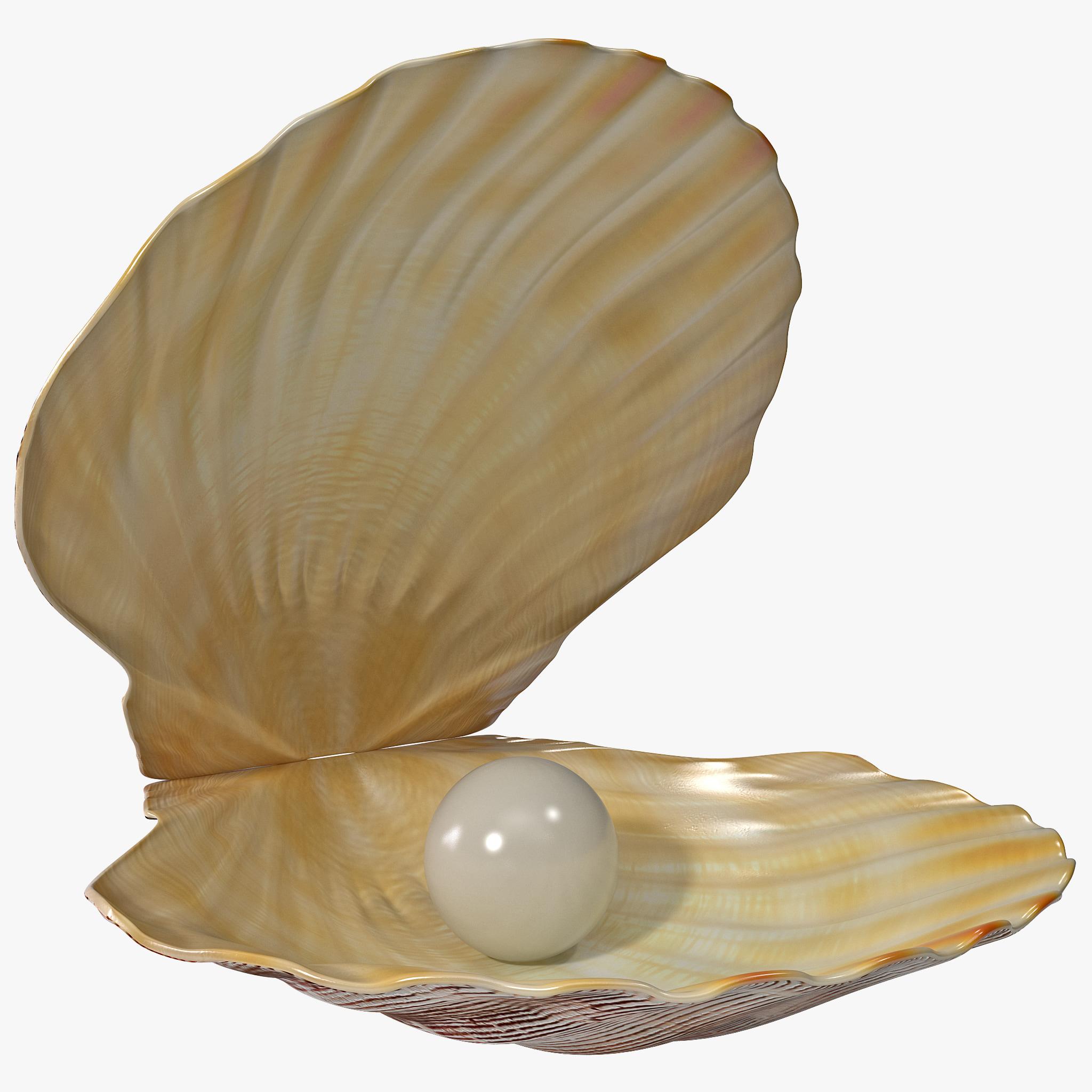 Pearl in Shell_1.jpg