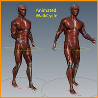 male muscular rigged 3d model