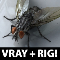 Fly realistic!  (RIGGED)(VRAY)