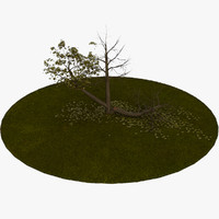 tree 5 3d model