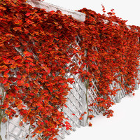 Red Autumn Fall color colour Colourful Ivy On White Garden Wooden Fence
