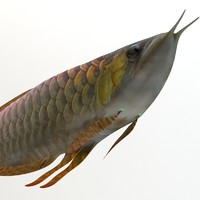 Arowana fish