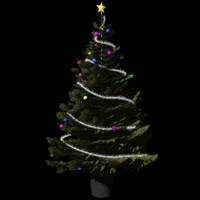 Christmas Tree M-01