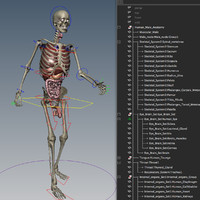maya skeletal internal organs rigged
