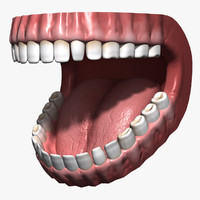3ds max human mouth teeth gums