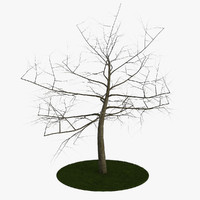 tree 7 branches 3d model