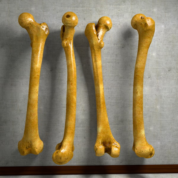 human thigh bone femur c4d - Human Femur Thigh Bone Leg Anatomy... by ...
