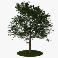tree 6 3d model