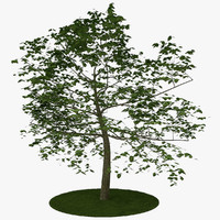 tree 7 3d model
