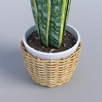 3d model snake plant