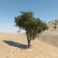 3d ghaf tree