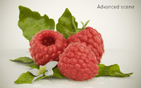 High quality raspberry