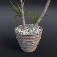 dracaena plant obj