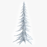 maya snowy pine tree snow
