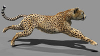 rigging animation cat 3d model