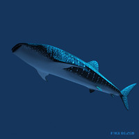 3ds max whale shark
