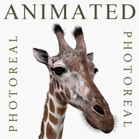 Photoreal HD Giraffe