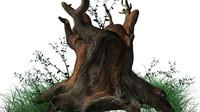 3d model stump