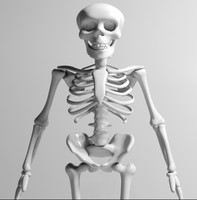 3d cartoon skeleton toy model