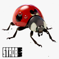 3d animation ladybug model