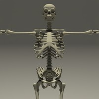walking skeleton animations fbx