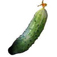 3d model cucumber flower