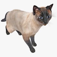 siamese cat 3d model - photo #43