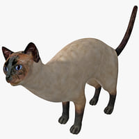3d siamese cat pose 4 model