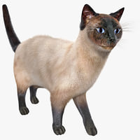 3d siamese cat pose 5
