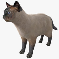 Siamese Cat Rigged Fur