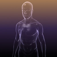 Human Body Anatomy - transparent silhouette of a Male for medical visualisation