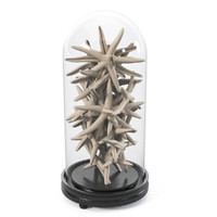sea decor star 3d max