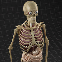 3ds max internal male skeleton