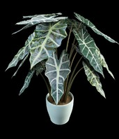 alocasia palm 3ds