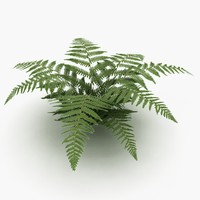 Low poly Ferns