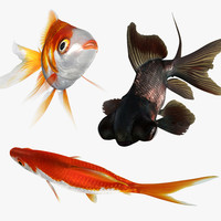 3d model goldfish set rigged