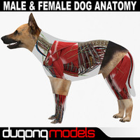 Male & Female Dog Anatomy Textured